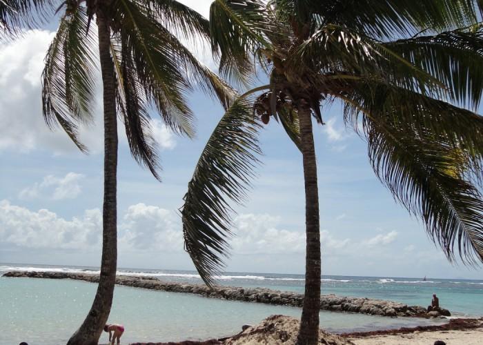 Ferien Goudeloupe 2014 - Strand in Basse Terre