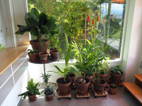 Tropenpflanzen - 2016