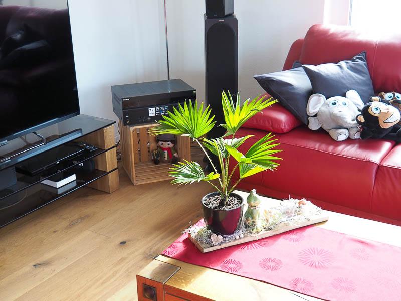 Balkonpflanzen - Tropenpflanzen - 2020