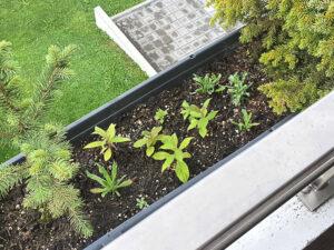 Balkonpflanzen - Tropenpflanzen
