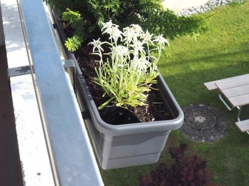 Balkonpflanzen 2019